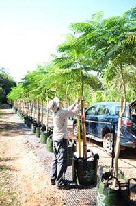 tree-stock-1